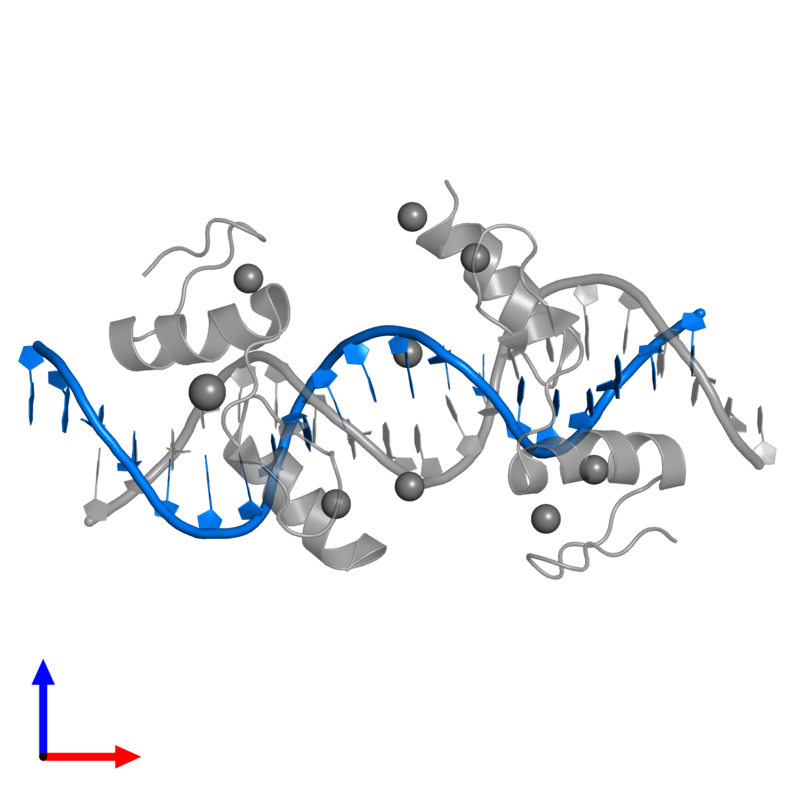 <div class='caption-body'>PDB entry 4is1 contains 1 copy of 5'-D(*AP*AP*TP*GP*CP*AP*GP*AP*AP*TP*CP*GP*AP*TP*TP*CP*TP*GP*CP*A)-3' in assembly 1. This DNA molecule is highlighted and viewed from the front.</div>