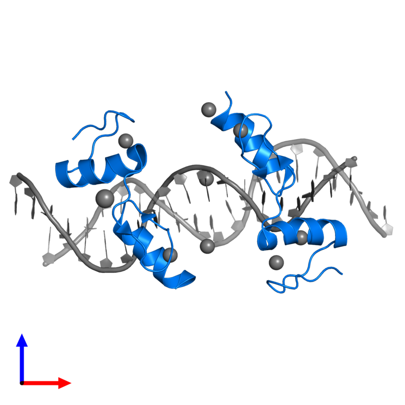 <div class='caption-body'>PDB entry 4is1 contains 2 copies of Zinc finger protein 217 in assembly 1. This protein is highlighted and viewed from the front.</div>