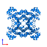 PDB 4ixt contains 4 copies of Halohydrin dehalogenase in assembly 1. This protein is highlighted and viewed from the front.