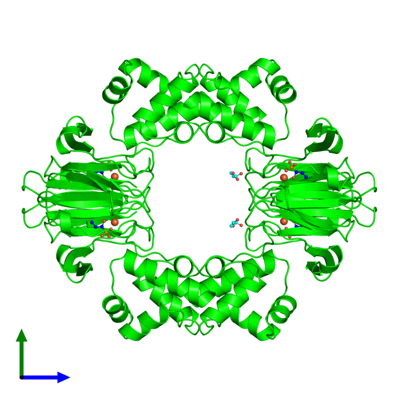 <div class='caption-body'><ul class ='image_legend_ul'> Tetrameric assembly 1 of PDB entry 4j1x coloured by chemically distinct molecules and viewed from the front. This assembly contains:<li class ='image_legend_li'>4 copies of Epoxidase</li><li class ='image_legend_li'>4 copies of FE (II) ION</li><li class ='image_legend_li'>4 copies of [(1S)-1-hydroxypropyl]phosphonic acid</li><li class ='image_legend_li'>2 copies of GLYCEROL</li></ul></div>