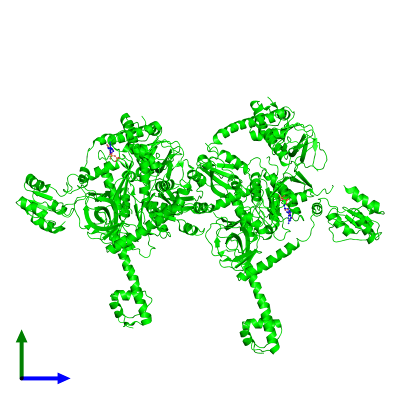<div class='caption-body'><ul class ='image_legend_ul'>The deposited structure of PDB entry 4kjz coloured by chemically distinct molecules and viewed from the side. The entry contains: <li class ='image_legend_li'>4 copies of Translation initiation factor IF-2</li><li class ='image_legend_li'>There is 1 non-polymeric molecule<ul class ='image_legend_ul'><li class ='image_legend_li'>2 copies of GUANOSINE-5'-DIPHOSPHATE</li></ul></li></div>