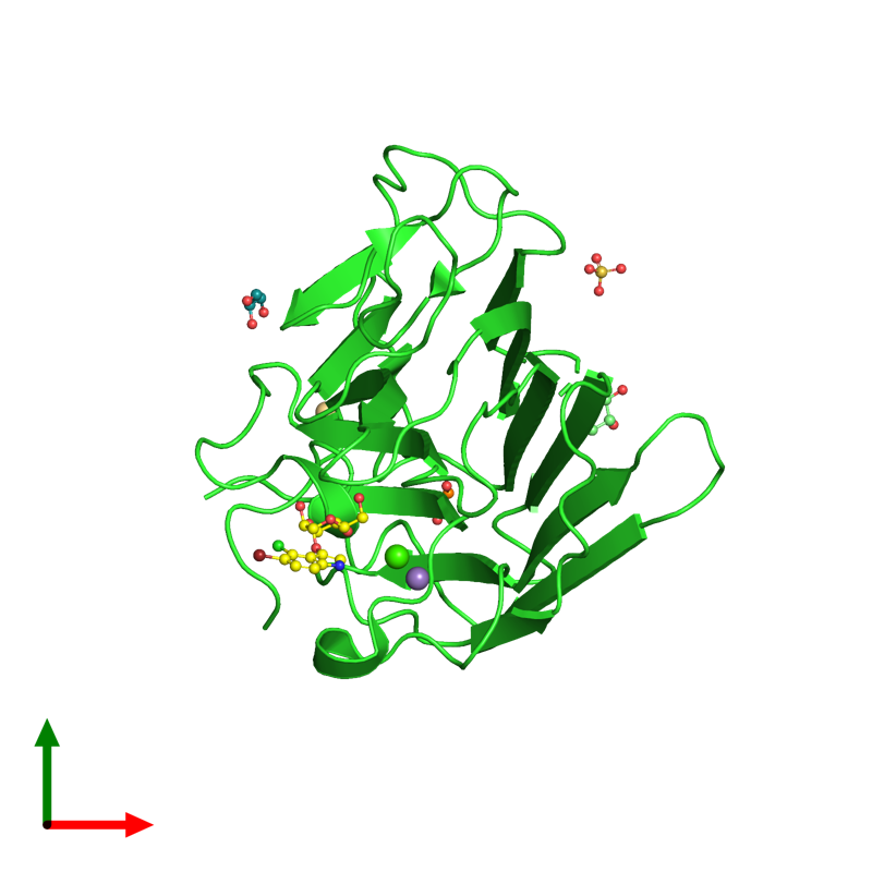 <div class='caption-body'><ul class ='image_legend_ul'>The deposited structure of PDB entry 4l8q coloured by chain and viewed from the top. The entry contains: <li class ='image_legend_li'>1 copy of Lectin ConGF</li><li class ='image_legend_li'>6 non-polymeric entities<ul class ='image_legend_ul'><li class ='image_legend_li'>1 copy of CALCIUM ION</li><li class ='image_legend_li'>1 copy of MANGANESE (II) ION</li><li class ='image_legend_li'>1 copy of 5-bromo-4-chloro-1H-indol-3-yl alpha-D-mannopyranoside</li><li class ='image_legend_li'>1 copy of SULFATE ION</li><li class ='image_legend_li'>2 copies of CADMIUM ION</li><li class ='image_legend_li'>3 copies of GLYCEROL</li></ul></li></div>