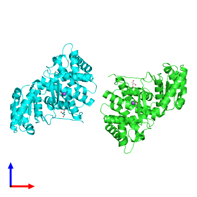 <div class='caption-body'><ul class ='image_legend_ul'>The deposited structure of PDB entry 4mca coloured by chain and viewed from the front. The entry contains: <li class ='image_legend_li'>2 copies of Glycerol dehydrogenase</li><li class ='image_legend_li'>3 non-polymeric entities<ul class ='image_legend_ul'><li class ='image_legend_li'>4 copies of ZINC ION</li><li class ='image_legend_li'>4 copies of GLYCEROL</li><li class ='image_legend_li'>2 copies of SODIUM ION</li></ul></li></div>