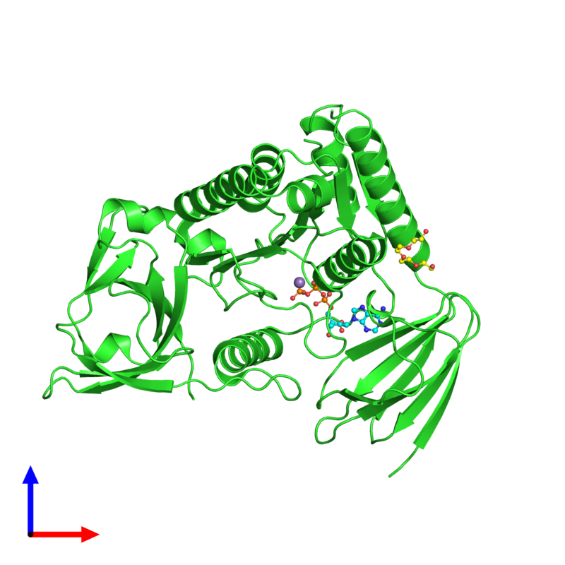 <div class='caption-body'><ul class ='image_legend_ul'>The deposited structure of PDB entry 4ohw coloured by chain and viewed from the front. The entry contains: <li class ='image_legend_li'>1 copy of Protein clpf-1</li><li class ='image_legend_li'>3 non-polymeric entities<ul class ='image_legend_ul'><li class ='image_legend_li'>1 copy of ADENOSINE-5'-TRIPHOSPHATE</li><li class ='image_legend_li'>1 copy of MANGANESE (II) ION</li><li class ='image_legend_li'>1 copy of NONAETHYLENE GLYCOL</li></ul></li></div>