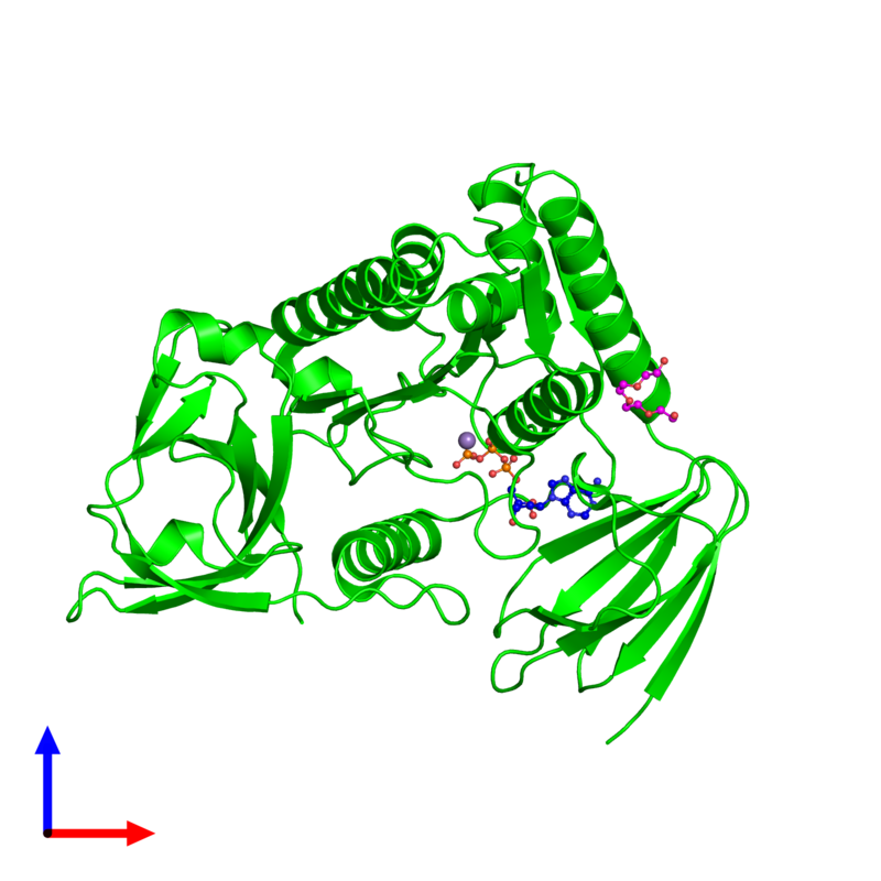 <div class='caption-body'><ul class ='image_legend_ul'>The deposited structure of PDB entry 4ohw coloured by chemically distinct molecules and viewed from the front. The entry contains: <li class ='image_legend_li'>1 copy of Protein clpf-1</li><li class ='image_legend_li'>3 non-polymeric entities<ul class ='image_legend_ul'><li class ='image_legend_li'>1 copy of ADENOSINE-5'-TRIPHOSPHATE</li><li class ='image_legend_li'>1 copy of MANGANESE (II) ION</li><li class ='image_legend_li'>1 copy of NONAETHYLENE GLYCOL</li></ul></li></div>
