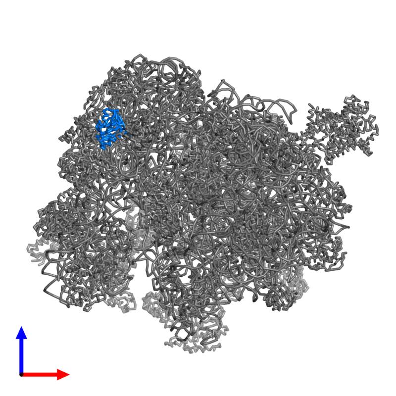 <div class='caption-body'>PDB entry 4v4n contains 1 copy of 30S ribosomal protein S8P in assembly 1. This protein is highlighted and viewed from the front.</div>