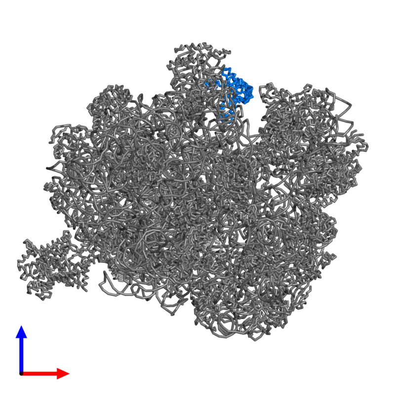 <div class='caption-body'>PDB entry 4v4n contains 1 copy of 50S ribosomal protein L5P in assembly 1. This protein is highlighted and viewed from the front.</div>
