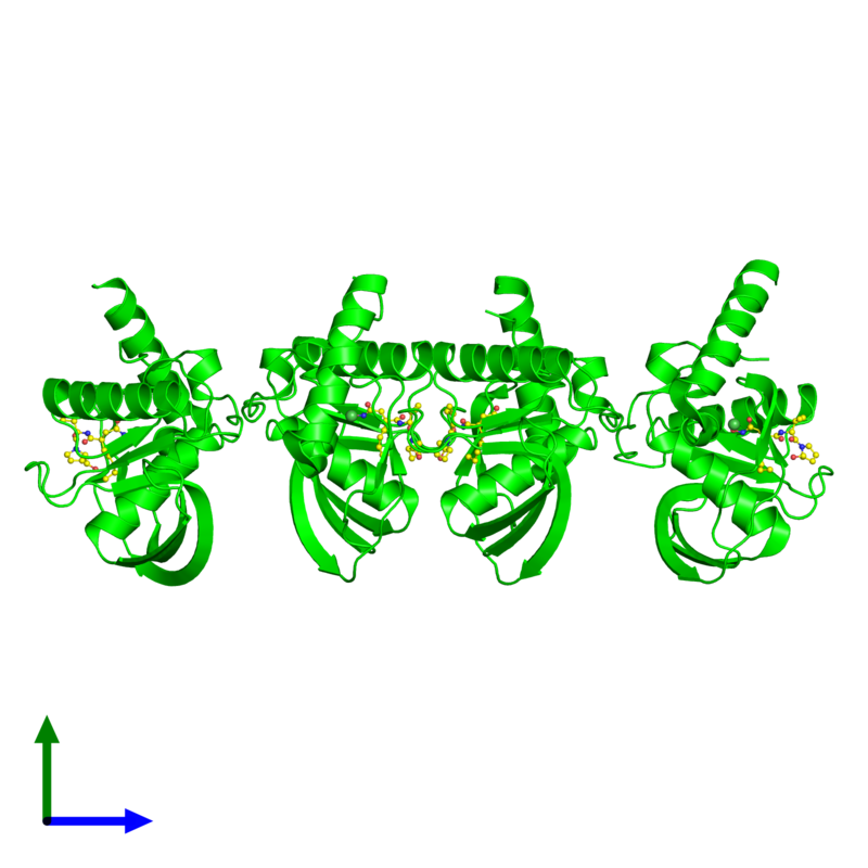 <div class='caption-body'><ul class ='image_legend_ul'> Tetrameric assembly 1 of PDB entry 4wxl coloured by chemically distinct molecules and viewed from the side. This assembly contains:<li class ='image_legend_li'>4 copies of Peptide deformylase</li><li class ='image_legend_li'>4 copies of NICKEL (II) ION</li><li class ='image_legend_li'>4 copies of ACTINONIN</li></ul></div>