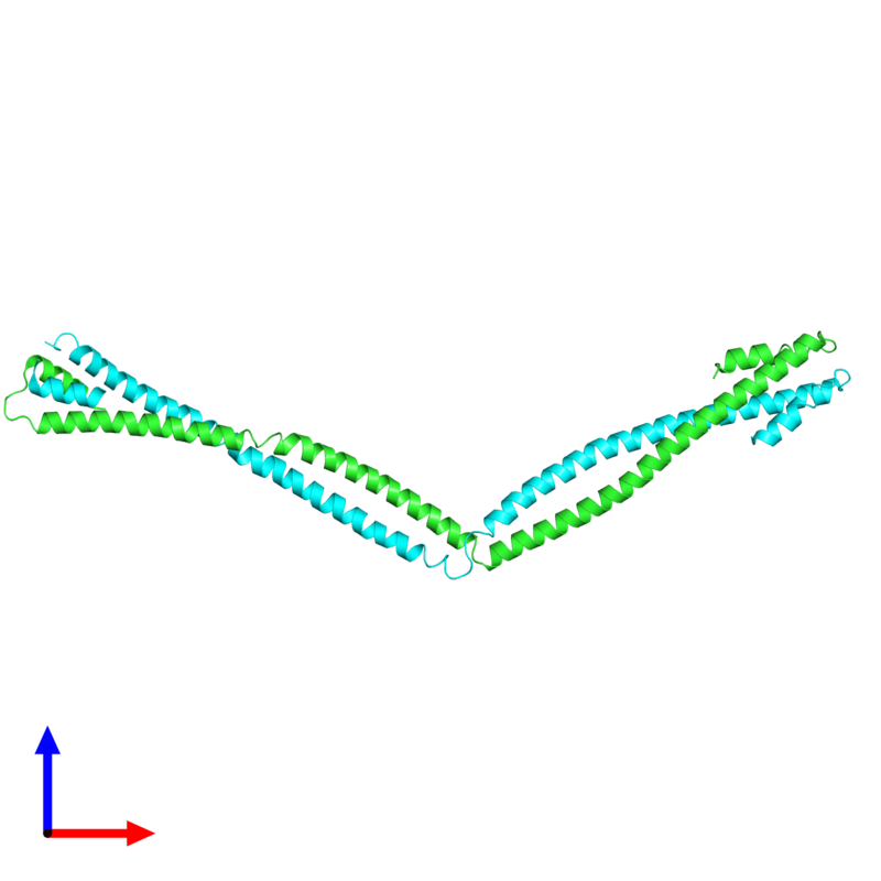 <div class='caption-body'><ul class ='image_legend_ul'> Dimeric assembly 1 of PDB entry 4xa6 coloured by chain and viewed from the front. This assembly contains:<li class ='image_legend_li'>2 copies of Capsid assembly scaffolding protein - Microtubule-associated protein RP/EB family member 1 - Myosin-7 chimera</li></ul></div>