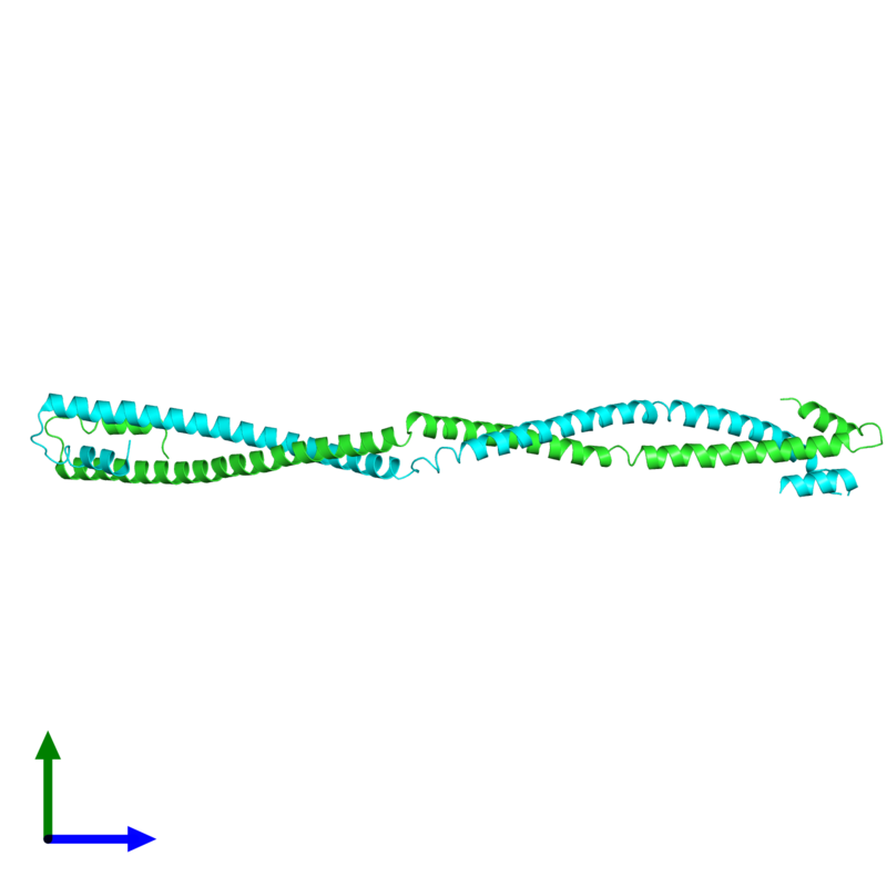 <div class='caption-body'><ul class ='image_legend_ul'> Dimeric assembly 1 of PDB entry 4xa6 coloured by chain and viewed from the side. This assembly contains:<li class ='image_legend_li'>2 copies of Capsid assembly scaffolding protein - Microtubule-associated protein RP/EB family member 1 - Myosin-7 chimera</li></ul></div>