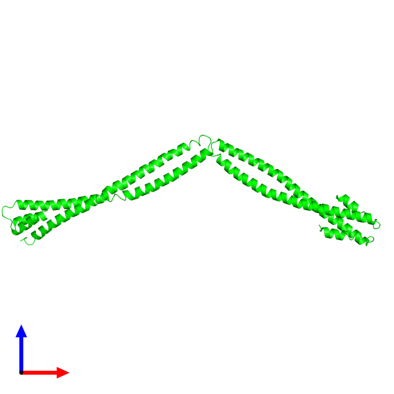 <div class='caption-body'><ul class ='image_legend_ul'> Dimeric assembly 1 of PDB entry 4xa6 coloured by chemically distinct molecules and viewed from the front. This assembly contains:<li class ='image_legend_li'>2 copies of Capsid assembly scaffolding protein - Microtubule-associated protein RP/EB family member 1 - Myosin-7 chimera</li></ul></div>
