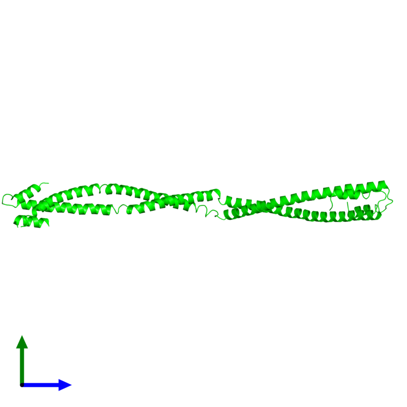<div class='caption-body'><ul class ='image_legend_ul'> Dimeric assembly 1 of PDB entry 4xa6 coloured by chemically distinct molecules and viewed from the side. This assembly contains:<li class ='image_legend_li'>2 copies of Capsid assembly scaffolding protein - Microtubule-associated protein RP/EB family member 1 - Myosin-7 chimera</li></ul></div>