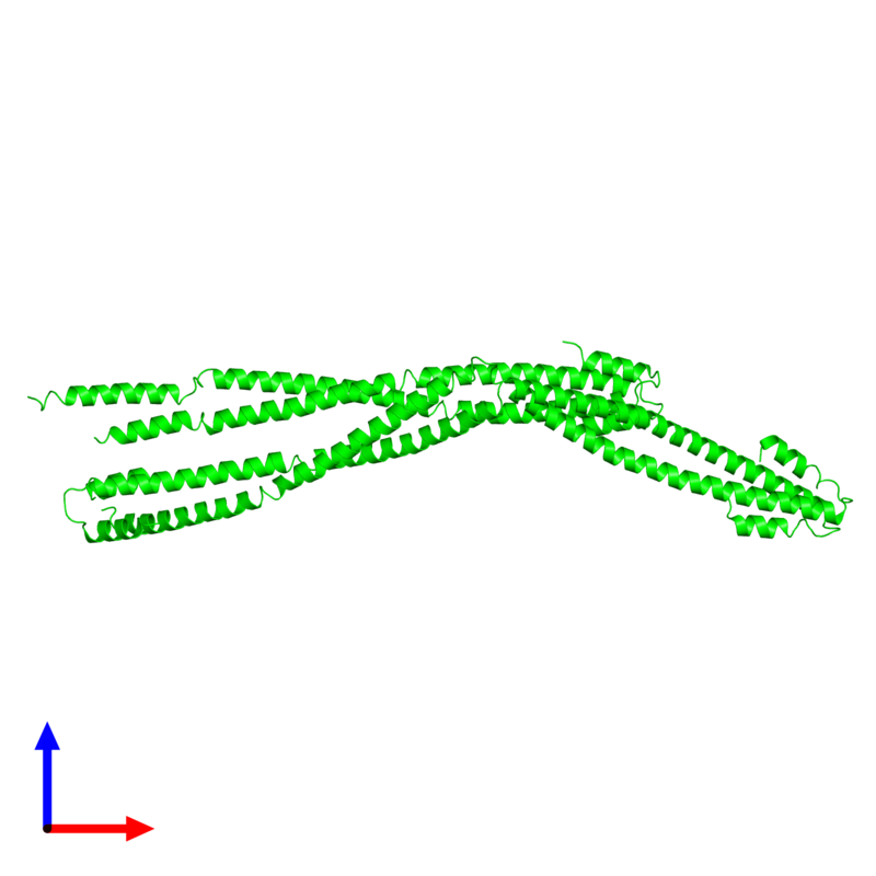 <div class='caption-body'><ul class ='image_legend_ul'>The deposited structure of PDB entry 4xa6 coloured by chemically distinct molecules and viewed from the front. The entry contains: <li class ='image_legend_li'>4 copies of Capsid assembly scaffolding protein - Microtubule-associated protein RP/EB family member 1 - Myosin-7 chimera</li><li class ='image_legend_li'>There are no non-polymeric molecules</li></ul></li></ul></li></div>