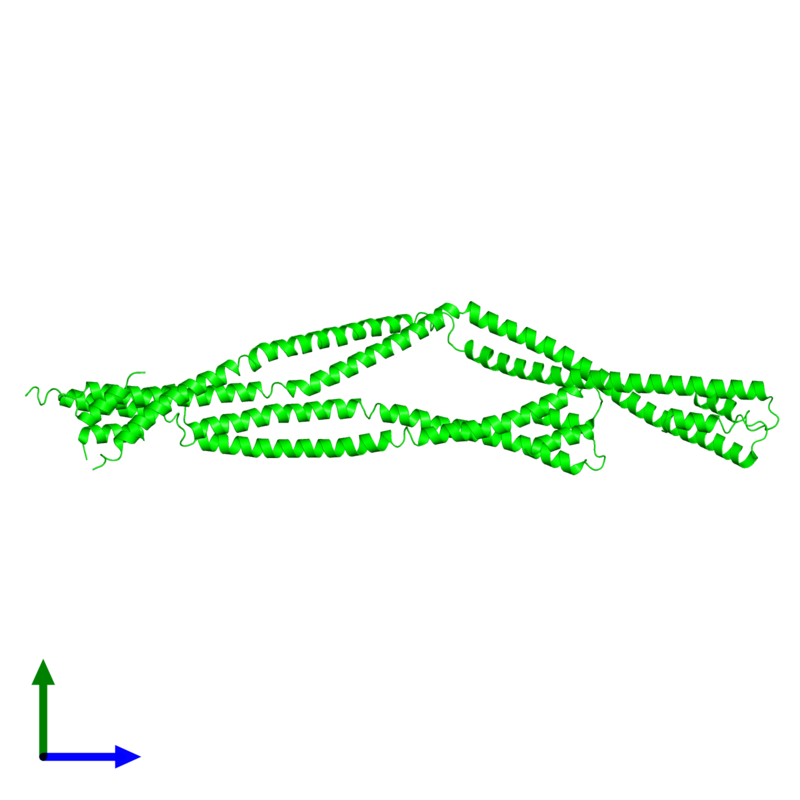 <div class='caption-body'><ul class ='image_legend_ul'>The deposited structure of PDB entry 4xa6 coloured by chemically distinct molecules and viewed from the side. The entry contains: <li class ='image_legend_li'>4 copies of Capsid assembly scaffolding protein - Microtubule-associated protein RP/EB family member 1 - Myosin-7 chimera</li><li class ='image_legend_li'>There are no non-polymeric molecules</li></ul></li></ul></li></div>