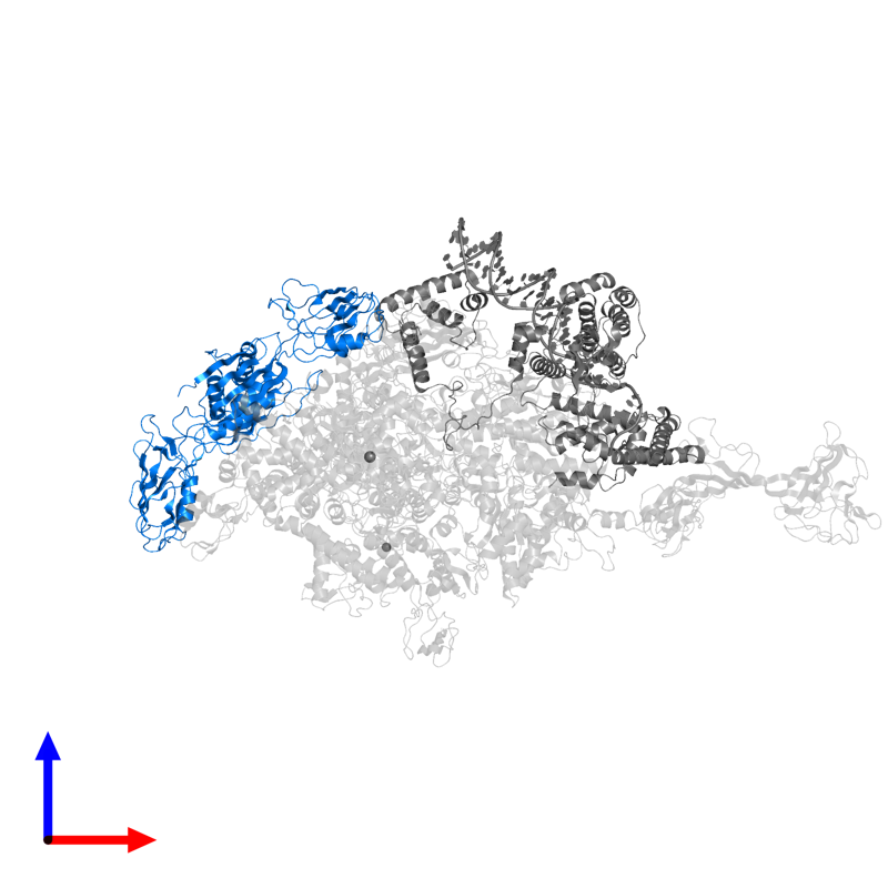 <div class='caption-body'>PDB entry 4xls contains 2 copies of DNA-directed RNA polymerase subunit alpha in assembly 1. This protein is highlighted and viewed from the front.</div>