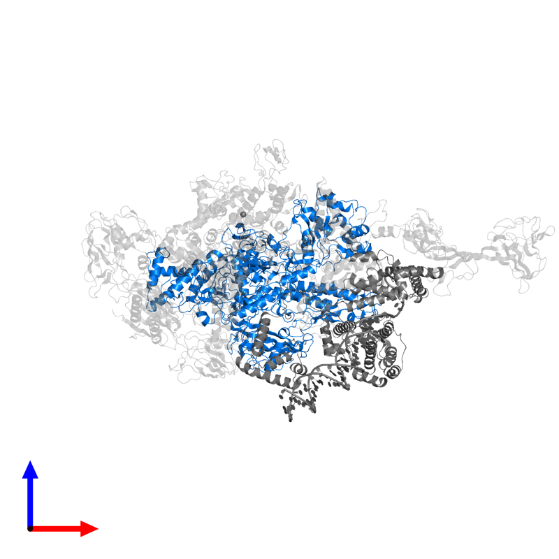<div class='caption-body'>PDB entry 4xls contains 1 copy of DNA-directed RNA polymerase subunit beta in assembly 1. This protein is highlighted and viewed from the front.</div>