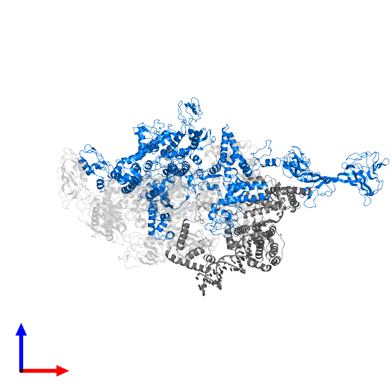 <div class='caption-body'>PDB entry 4xls contains 1 copy of DNA-directed RNA polymerase subunit beta' in assembly 1. This protein is highlighted and viewed from the front.</div>
