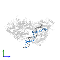 PDB 5c52 contains 1 copy of DNA (26-MER) in assembly 1. This DNA molecule is highlighted and viewed from the side.