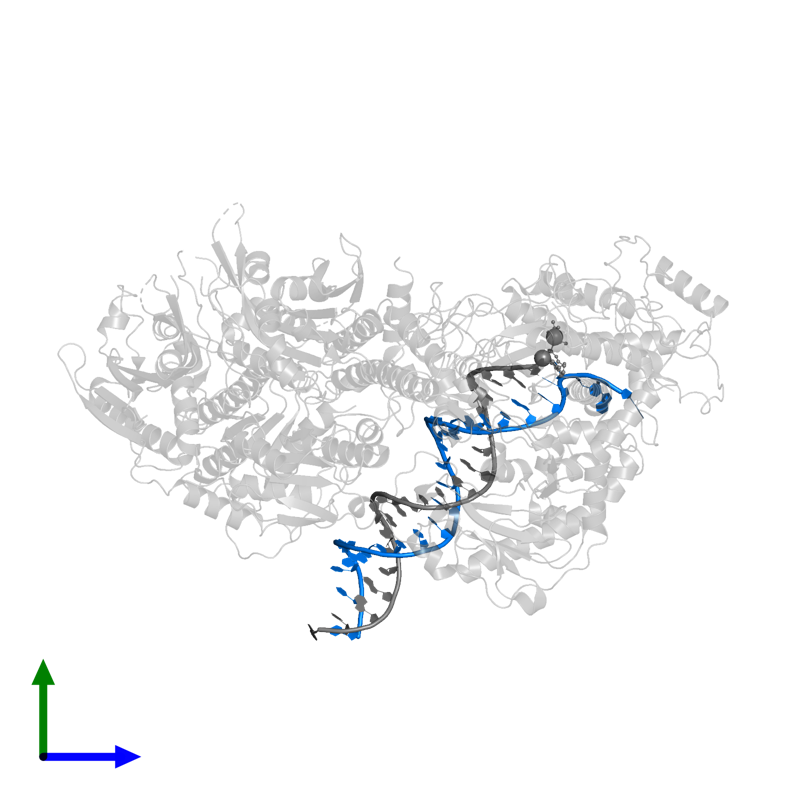 <div class='caption-body'>PDB entry 5c52 contains 1 copy of DNA (26-MER) in assembly 1. This DNA molecule is highlighted and viewed from the side.</div>