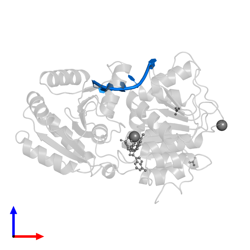 <div class='caption-body'>PDB entry 5elx contains 1 copy of RNA (5'-R(P*UP*UP*UP*UP*UP*U)-3') in assembly 1. This RNA molecule is highlighted and viewed from the front.</div>