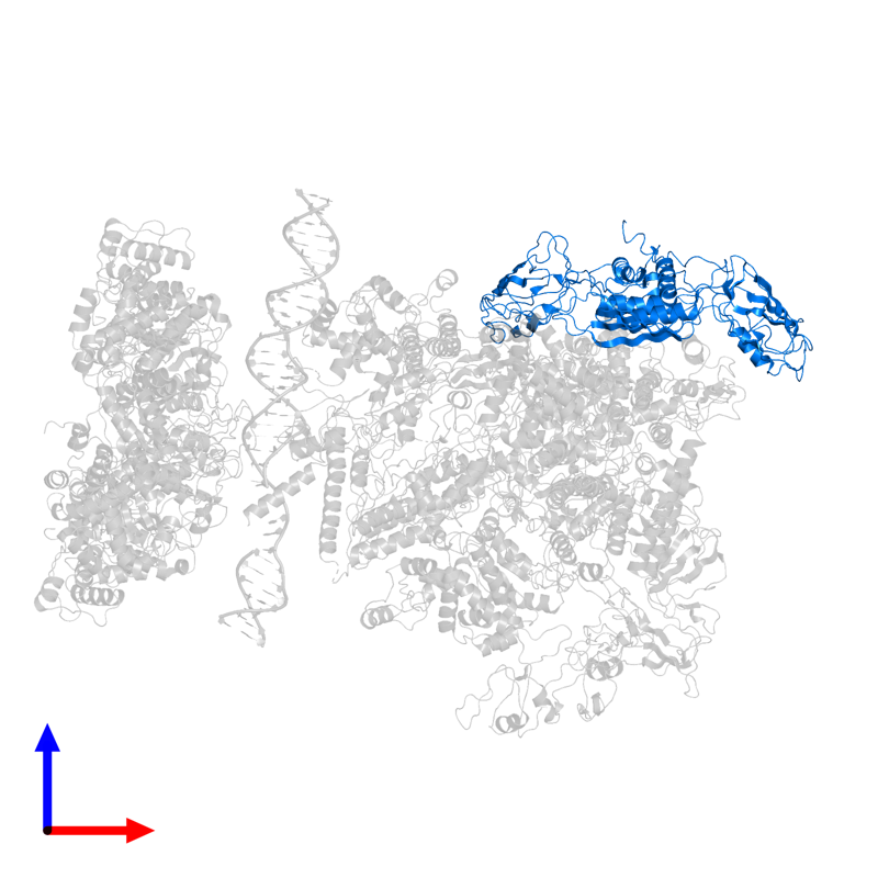 <div class='caption-body'>PDB entry 5nss contains 2 copies of DNA-directed RNA polymerase subunit alpha in assembly 1. This protein is highlighted and viewed from the front.</div>