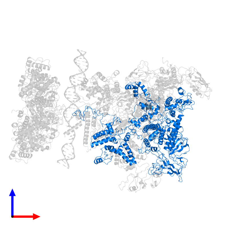 <div class='caption-body'>PDB entry 5nss contains 1 copy of DNA-directed RNA polymerase subunit beta',DNA-directed RNA polymerase subunit beta',DNA-directed RNA polymerase subunit beta' in assembly 1. This protein is highlighted and viewed from the front.</div>
