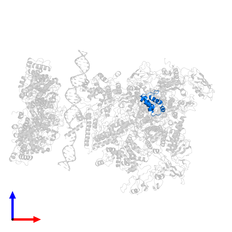 <div class='caption-body'>PDB entry 5nss contains 1 copy of DNA-directed RNA polymerase subunit omega in assembly 1. This protein is highlighted and viewed from the front.</div>