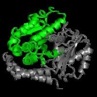 1 copy of Pfam domain PF00091 (Tubulin/FtsZ family, GTPase domain) in Tubulin alpha-1B chain in PDB 5ocu.