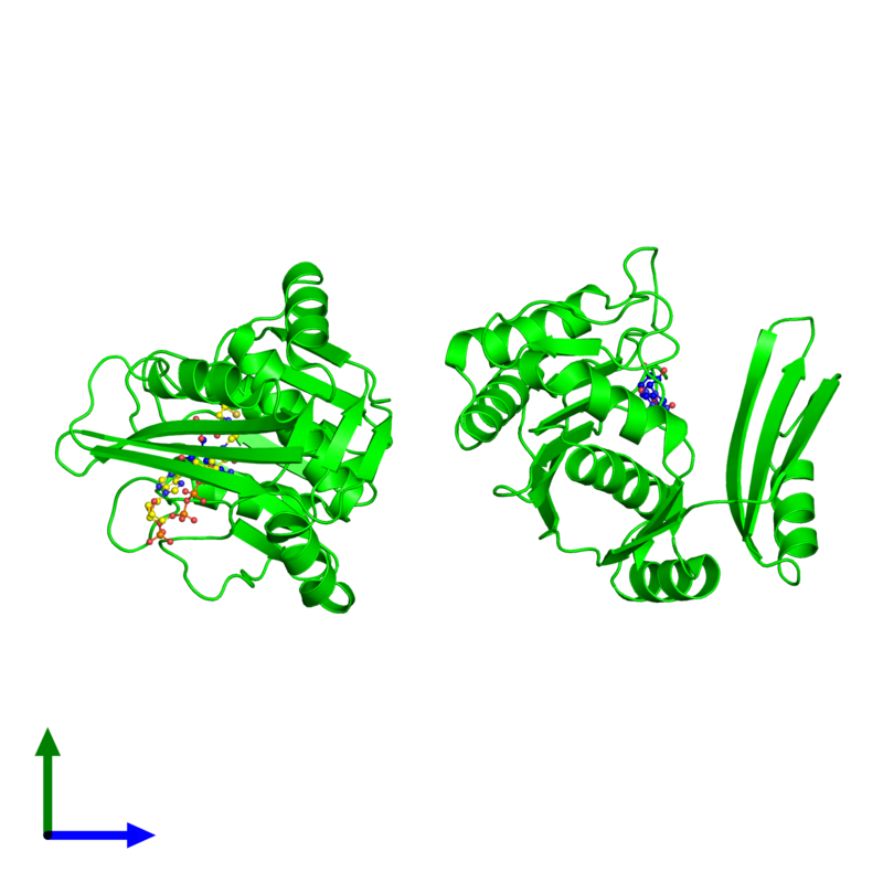 <div class='caption-body'><ul class ='image_legend_ul'>The deposited structure of PDB entry 5tva coloured by chemically distinct molecules and viewed from the side. The entry contains: <li class ='image_legend_li'>2 copies of 6-carboxyhexanoate--CoA ligase</li><li class ='image_legend_li'>2 non-polymeric entities<ul class ='image_legend_ul'><li class ='image_legend_li'>2 copies of ADENOSINE MONOPHOSPHATE</li><li class ='image_legend_li'>1 copy of COENZYME A</li></ul></li></div>