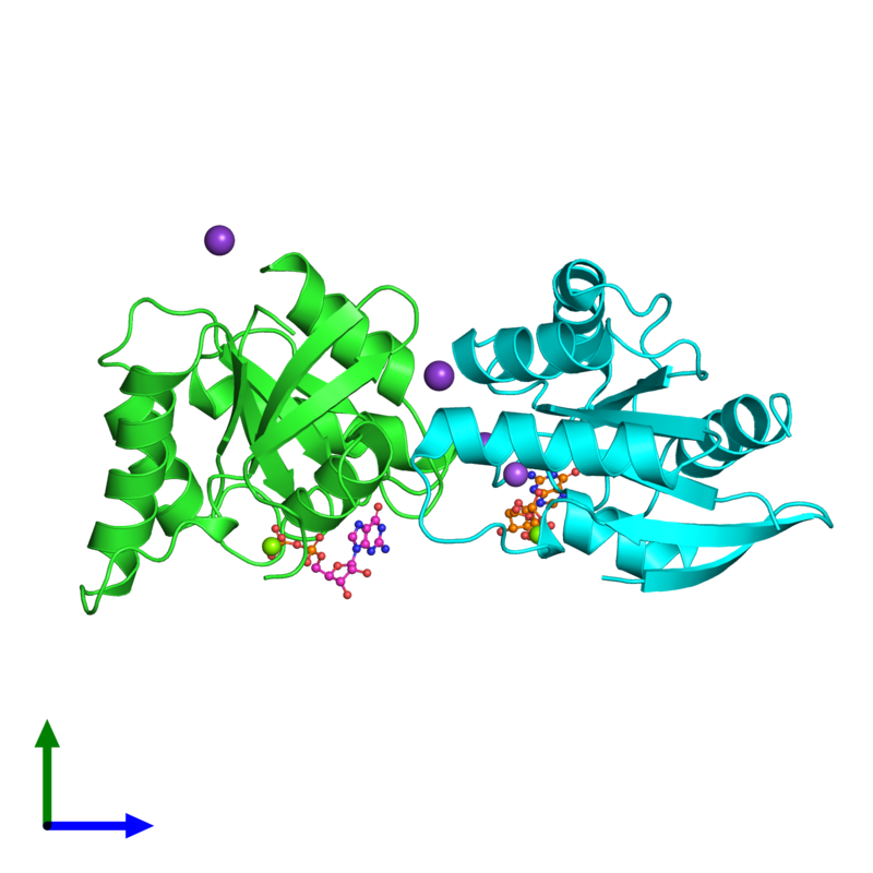 <div class='caption-body'><ul class ='image_legend_ul'>The deposited structure of PDB entry 5x4b coloured by chain and viewed from the side. The entry contains: <li class ='image_legend_li'>2 copies of GTPase Der</li><li class ='image_legend_li'>4 non-polymeric entities<ul class ='image_legend_ul'><li class ='image_legend_li'>2 copies of GUANOSINE-5'-DIPHOSPHATE</li><li class ='image_legend_li'>3 copies of POTASSIUM ION</li><li class ='image_legend_li'>2 copies of MAGNESIUM ION</li><li class ='image_legend_li'>1 copy of SODIUM ION</li></ul></li></div>