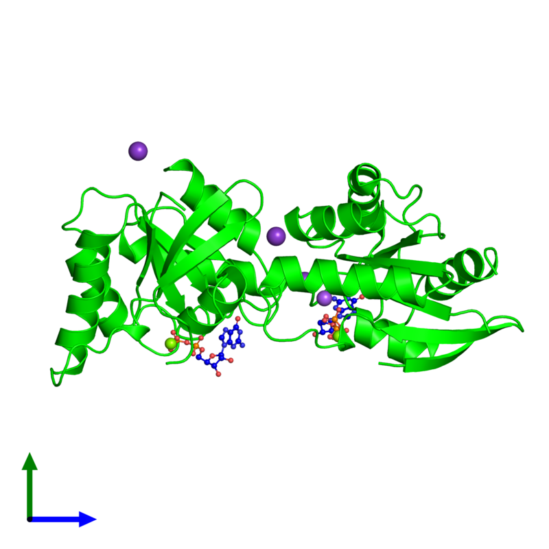 <div class='caption-body'><ul class ='image_legend_ul'>The deposited structure of PDB entry 5x4b coloured by chemically distinct molecules and viewed from the side. The entry contains: <li class ='image_legend_li'>2 copies of GTPase Der</li><li class ='image_legend_li'>4 non-polymeric entities<ul class ='image_legend_ul'><li class ='image_legend_li'>2 copies of GUANOSINE-5'-DIPHOSPHATE</li><li class ='image_legend_li'>3 copies of POTASSIUM ION</li><li class ='image_legend_li'>2 copies of MAGNESIUM ION</li><li class ='image_legend_li'>1 copy of SODIUM ION</li></ul></li></div>