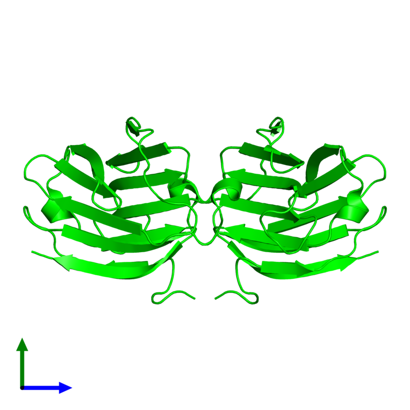 <div class='caption-body'><ul class ='image_legend_ul'> Dimeric assembly 1 of PDB entry 5xg7 coloured by chemically distinct molecules and viewed from the side. This assembly contains:<li class ='image_legend_li'>2 copies of Galactoside-binding soluble lectin 13</li></ul></div>