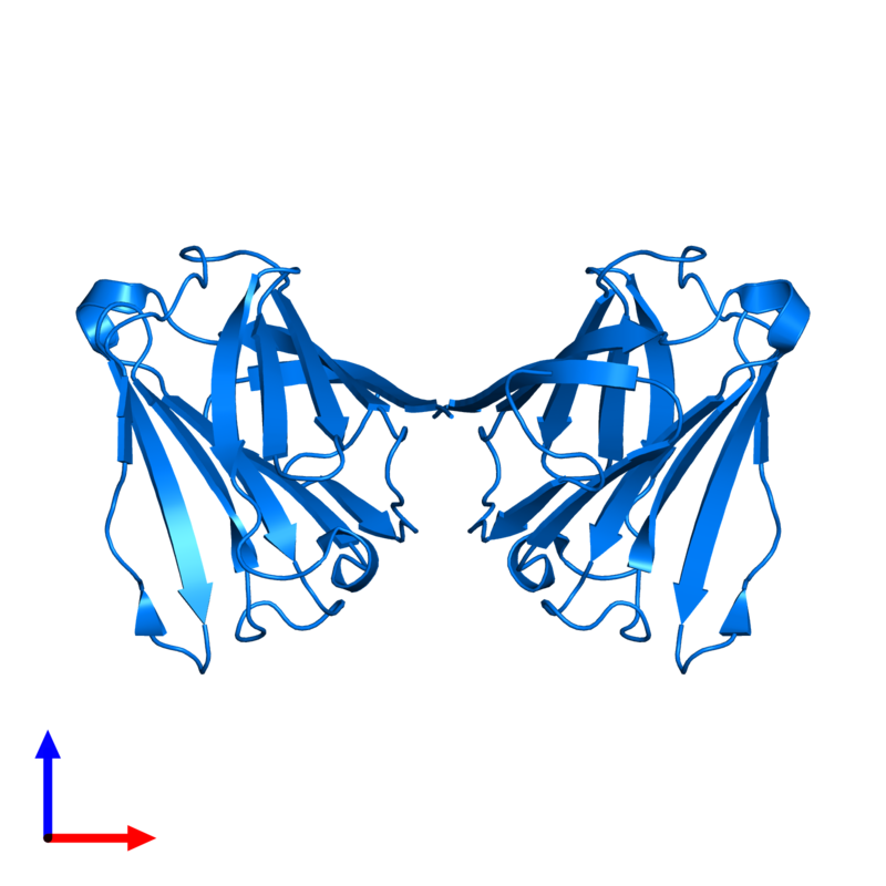<div class='caption-body'>PDB entry 5y03 contains 2 copies of Galactoside-binding soluble lectin 13 in assembly 1. This protein is highlighted and viewed from the front.</div>