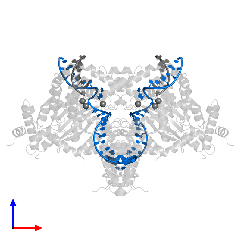 <div class='caption-body'>PDB entry 6dww contains 2 copies of DNA (25-MER) in assembly 1. This DNA molecule is highlighted and viewed from the front.</div>