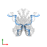 PDB 6dww contains 2 copies of DNA (25-MER) in assembly 1. This DNA molecule is highlighted and viewed from the top.