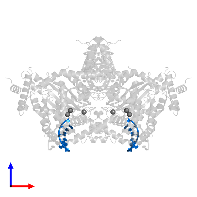 <div class='caption-body'>PDB entry 6dww contains 2 copies of DNA (5'-D(*GP*CP*GP*TP*GP*AP*A)-3') in assembly 1. This DNA molecule is highlighted and viewed from the front.</div>