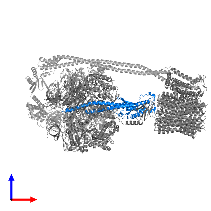 <div class='caption-body'>PDB entry 6oqu contains 1 copy of ATP synthase gamma chain in assembly 1. This protein is highlighted and viewed from the front.</div>