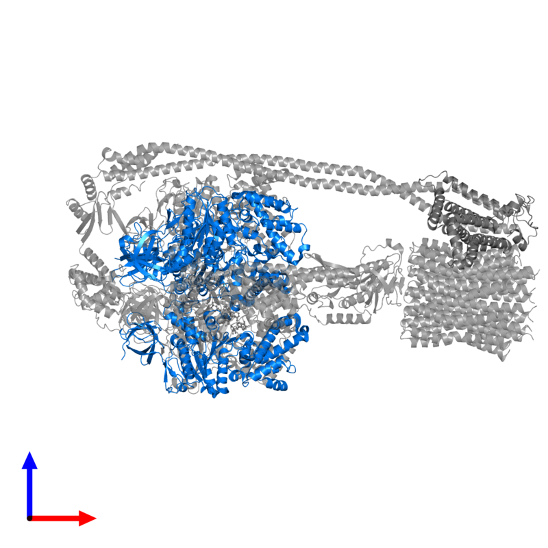 <div class='caption-body'>PDB entry 6oqu contains 3 copies of ATP synthase subunit beta in assembly 1. This protein is highlighted and viewed from the front.</div>