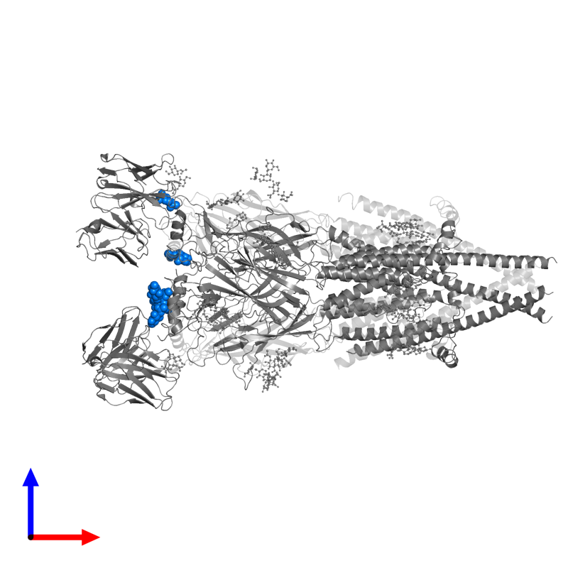 <div class='caption-body'>PDB entry 6pv8 contains 6 copies of 2-acetamido-2-deoxy-beta-D-glucopyranose in assembly 1. This small molecule is highlighted and viewed from the front.</div>