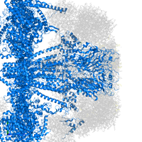 PDB 6w1m contains 5 copies of 5-hydroxytryptamine receptor 3A in assembly 1. This protein is highlighted and viewed from the side.