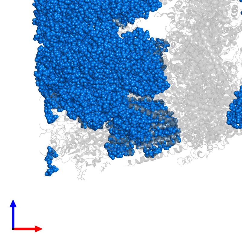 <div class='caption-body'>PDB entry 6w1m contains 5 copies of 2-acetamido-2-deoxy-beta-D-glucopyranose-(4-4)-2-acetamido-2-deoxy-beta-D-glucopyranose in assembly 1. This small molecule is highlighted and viewed from the front.</div>