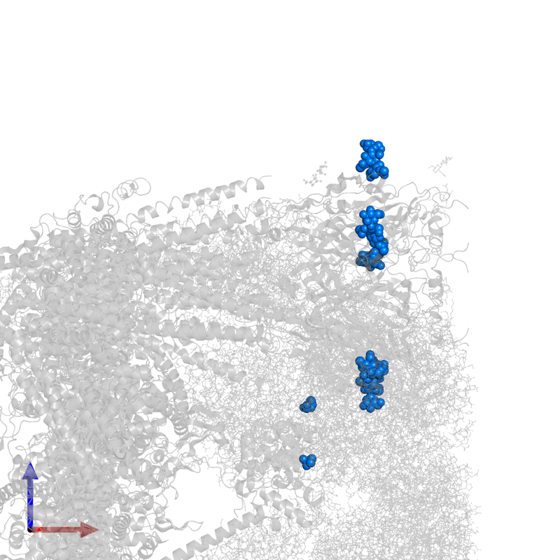 <div class='caption-body'>PDB entry 6w1m contains 5 copies of beta-D-mannopyranose-(1-4)-2-acetamido-2-deoxy-beta-D-glucopyranose-(1-4)-2-acetamido-2-deoxy-beta-D-glucopyranose in assembly 1. This small molecule is highlighted and viewed from the front.</div>