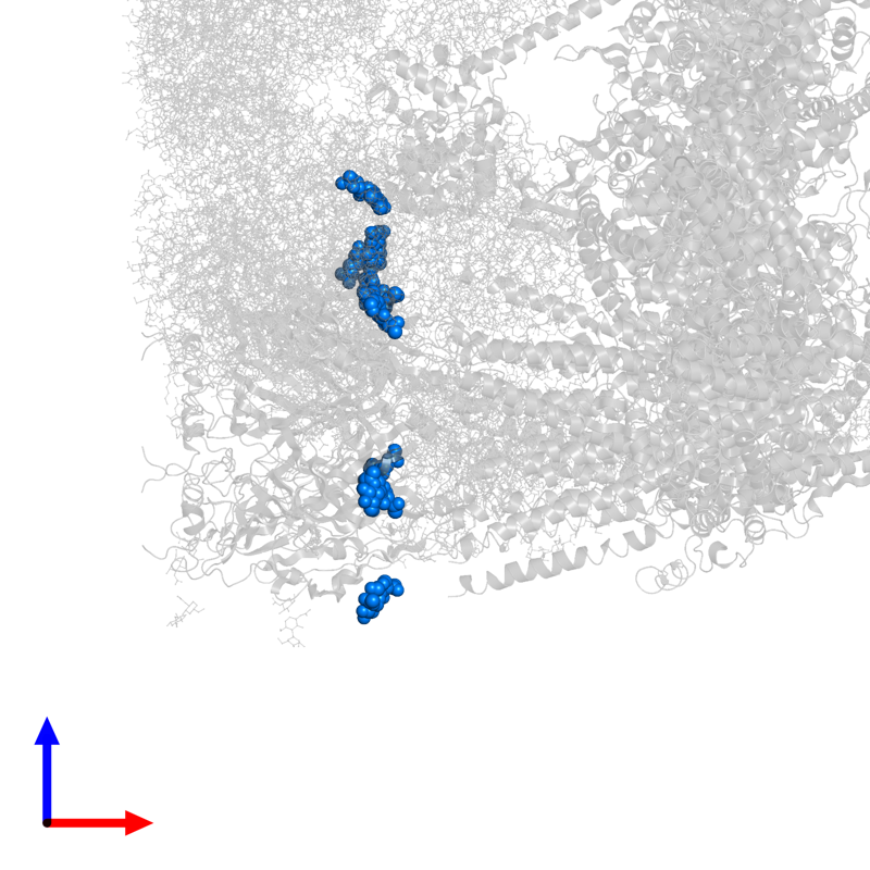 <div class='caption-body'>PDB entry 6w1m contains 5 copies of 2-acetamido-2-deoxy-beta-D-glucopyranose-(1-4)-2-acetamido-2-deoxy-beta-D-glucopyranose in assembly 1. This small molecule is highlighted and viewed from the front.</div>
