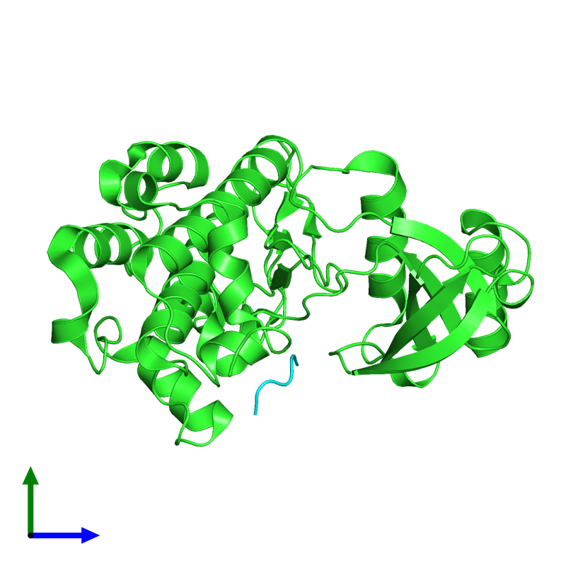 <div class='caption-body'><ul class ='image_legend_ul'>The deposited structure of PDB entry 6wlx coloured by chain and viewed from the side. The entry contains: <li class ='image_legend_li'>1 copy of Serine/threonine-protein kinase PAK 4</li><li class ='image_legend_li'>1 copy of Catenin beta-1</li><li class ='image_legend_li'>There are no non-polymeric molecules</li></ul></li></ul></li></div>