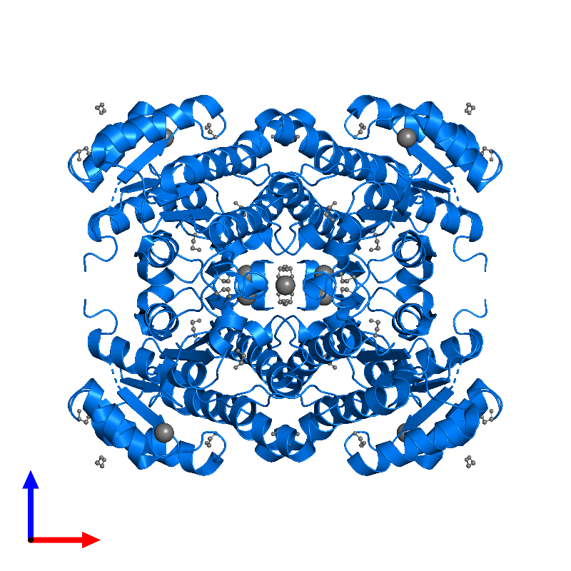 <div class='caption-body'>PDB entry 6y10 contains 4 copies of R-specific alcohol dehydrogenase in assembly 1. This protein is highlighted and viewed from the front.</div>