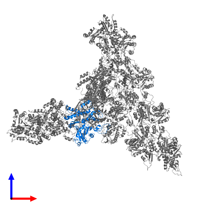 <div class='caption-body'>PDB entry 7aqk contains 1 copy of Actin-related protein 2 in assembly 1. This protein is highlighted and viewed from the front.</div>