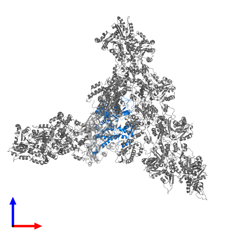 <div class='caption-body'>PDB entry 7aqk contains 1 copy of Actin-related protein 3 in assembly 1. This protein is highlighted and viewed from the front.</div>