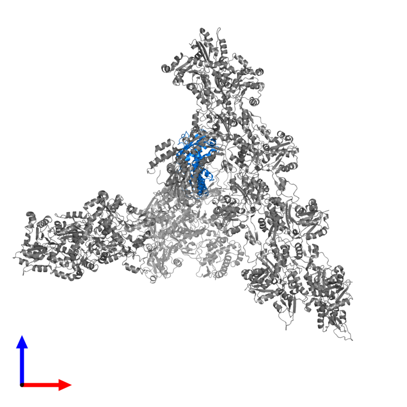 <div class='caption-body'>PDB entry 7aqk contains 1 copy of Actin-related protein 2/3 complex subunit 2 in assembly 1. This protein is highlighted and viewed from the front.</div>