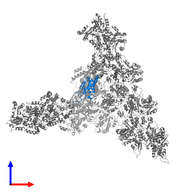 <div class='caption-body'>PDB entry 7aqk contains 1 copy of Actin-related protein 2/3 complex subunit 4 in assembly 1. This protein is highlighted and viewed from the front.</div>