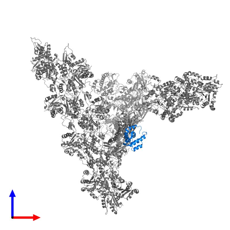 <div class='caption-body'>PDB entry 7aqk contains 1 copy of Actin-related protein 2/3 complex subunit 5 in assembly 1. This protein is highlighted and viewed from the front.</div>